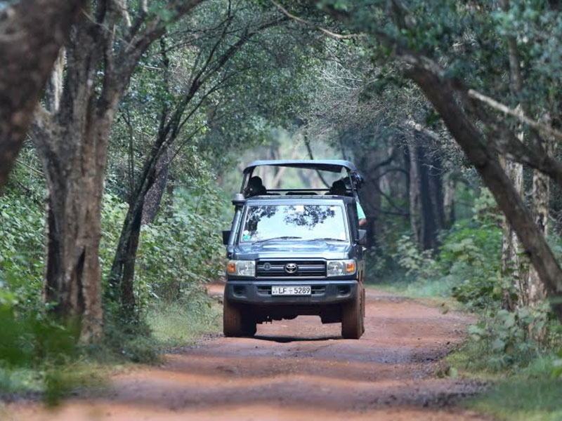 Safaris in Sri Lanka | Safari Holiday in Sri Lanka | Wildlife Safari Holidays in Sri Lanka | Safari Tours in Sri Lanka | Wildlife Safari Tours in Sri Lanka