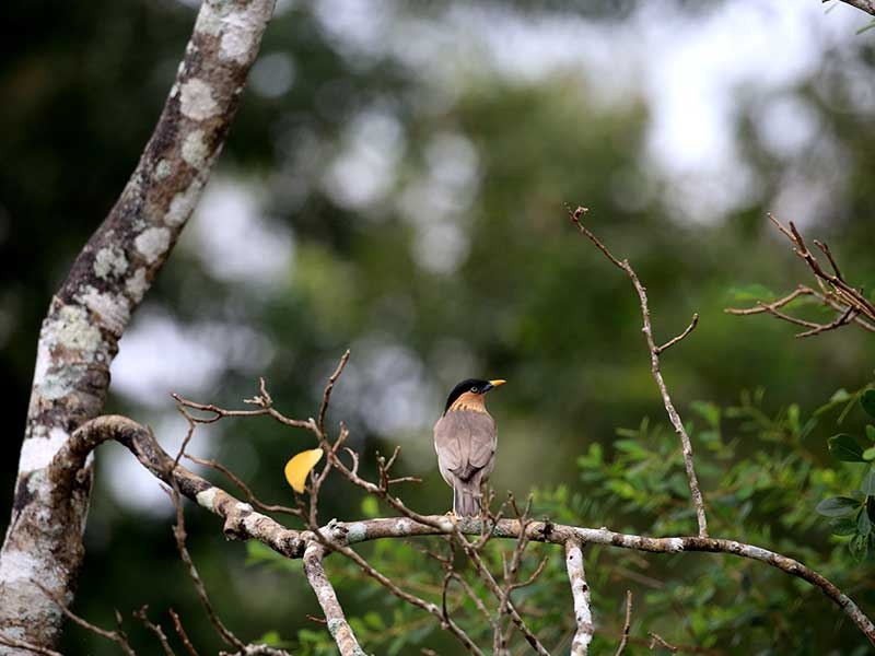 kumana national park, bird watching ours sri